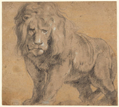 Peter Paul Rubens - Lion, c. 1612-1613